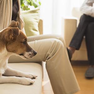 ペットと住めるペット可賃貸